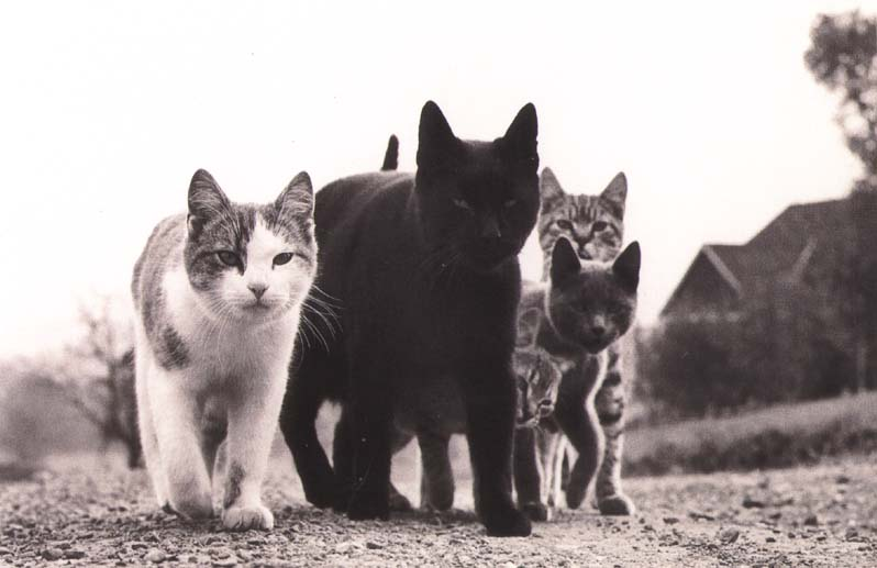 CATS: the Nazis of the animal kingdom?